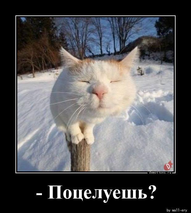 - Поцелуешь?