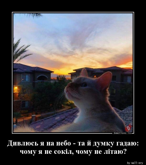 Дивлюсь я на небо - та й думку гадаю: чому я не сокіл, чому не літаю?