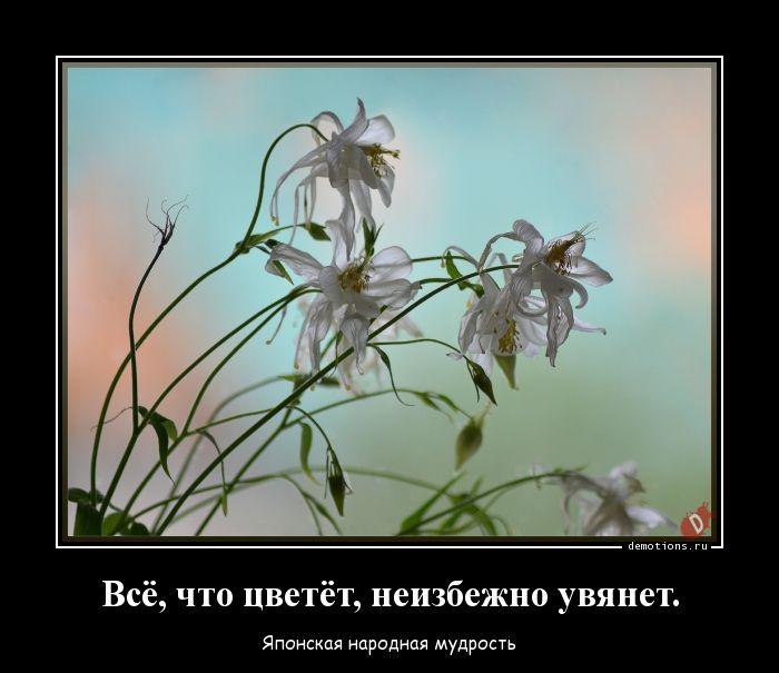 Всё, что цветёт, неизбежно увянет.