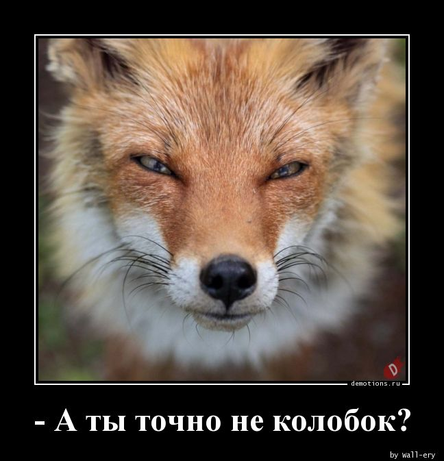 - А ты точно не колобок?