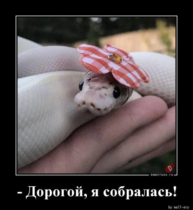 - Дорогой, я собралась!
