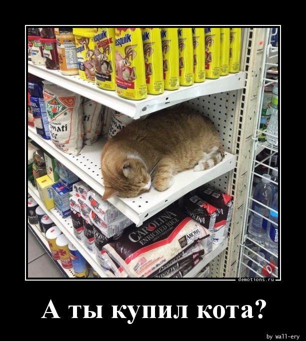 А ты купил кота?