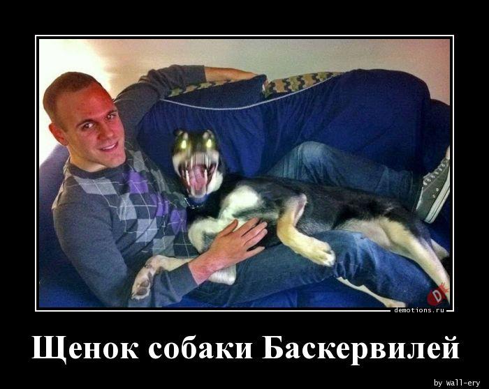 Щенок собаки Баскервилей