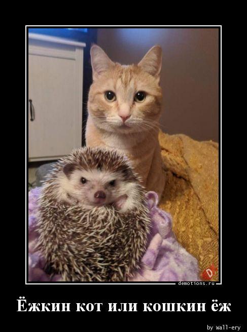 Ёжкин кот или кошкин ёж