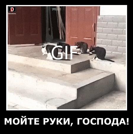 МОЙТЕ РУКИ, ГОСПОДА!