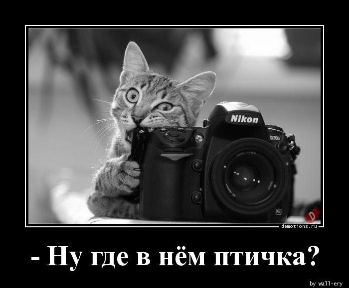 - Ну где в нём птичка?