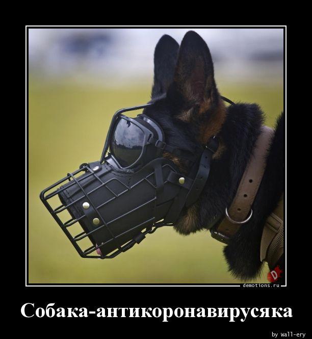 Собака-антикоронавирусяка
