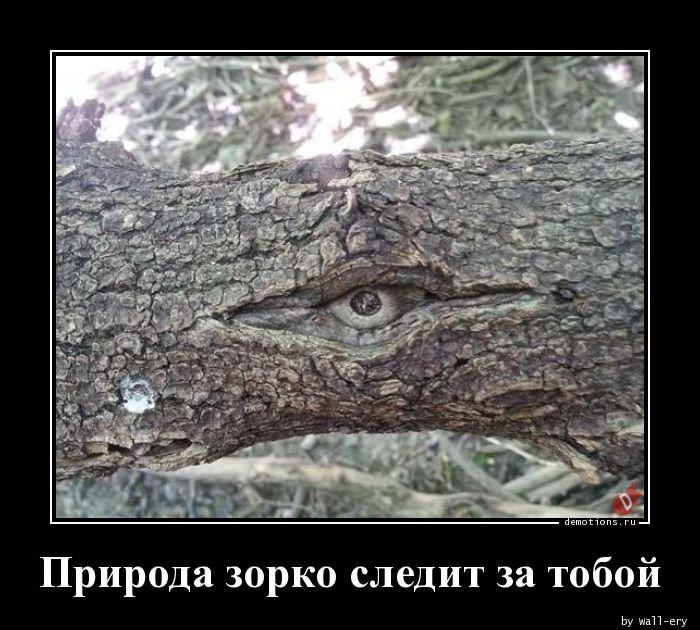 Природа зорко следит за тобой