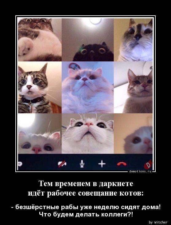 Тем временем в даркнете идёт рабочее совещание котов: