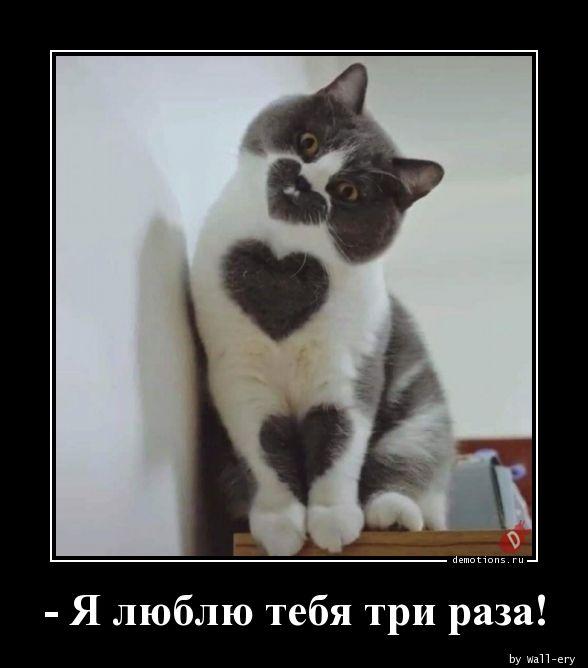 - Я люблю тебя три раза!