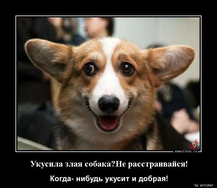 Укусила злая собака?Не расстраивайся!