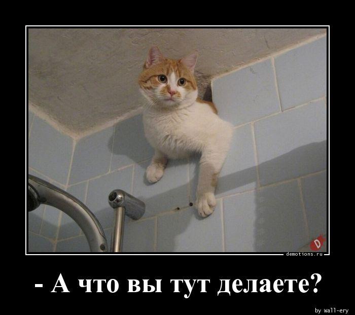 - А что вы тут делаете?