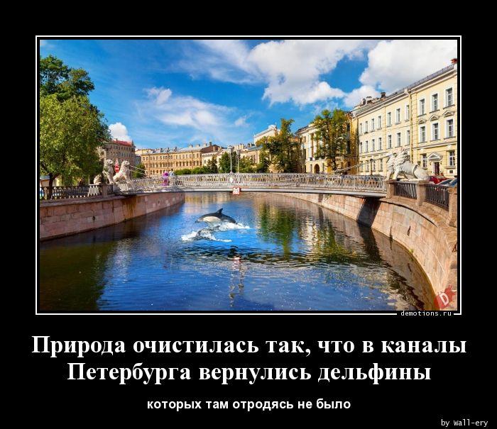 Природа очистилась так, что в каналы Петербурга вернулись дельфины