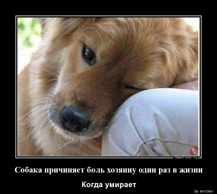 Собака причиняет боль хозяину один раз в жизни