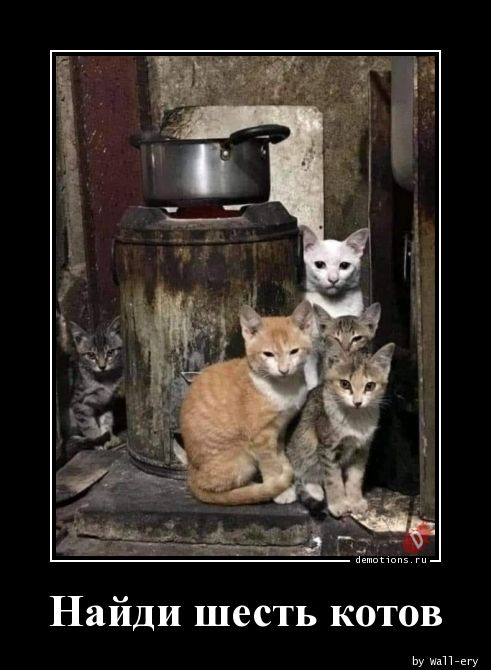 Найди шесть котов