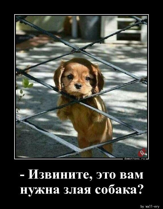 - Извините, это вам нужна злая собака?