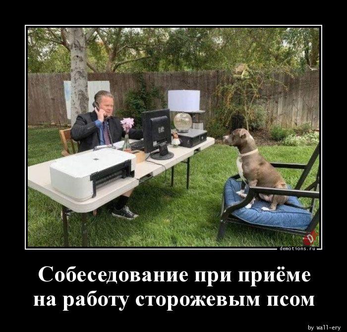 Собеседование при приёме на работу сторожевым псом