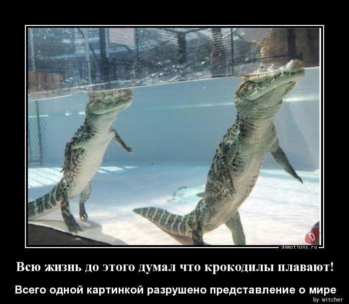 Всю жизнь до этого думал что крокодилы плавают!