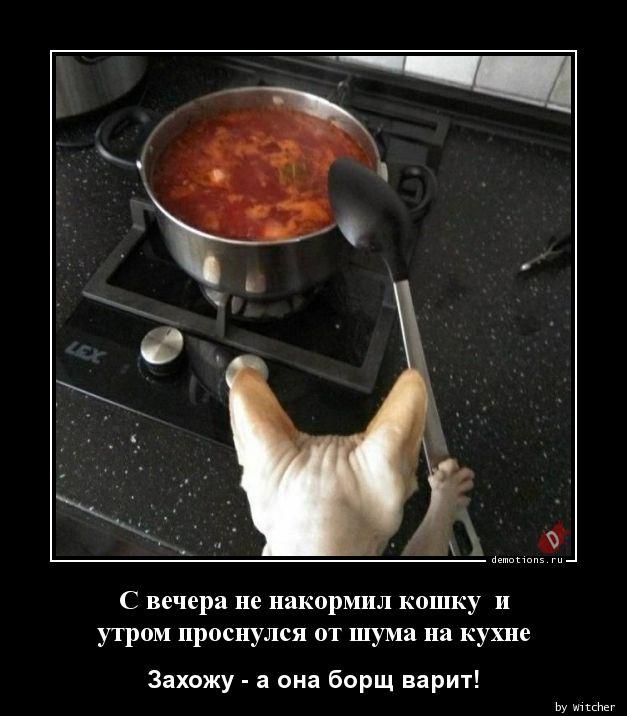 С вечера не накормил кошку  и утром проснулся от шума на кухне