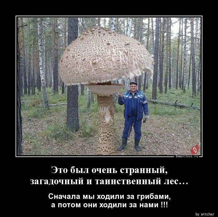 Это был очень странный,n загадочный и таинственный лес…