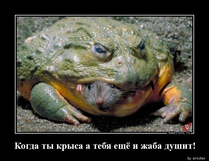 Когда ты крыса а тебя ещё и жаба душит!