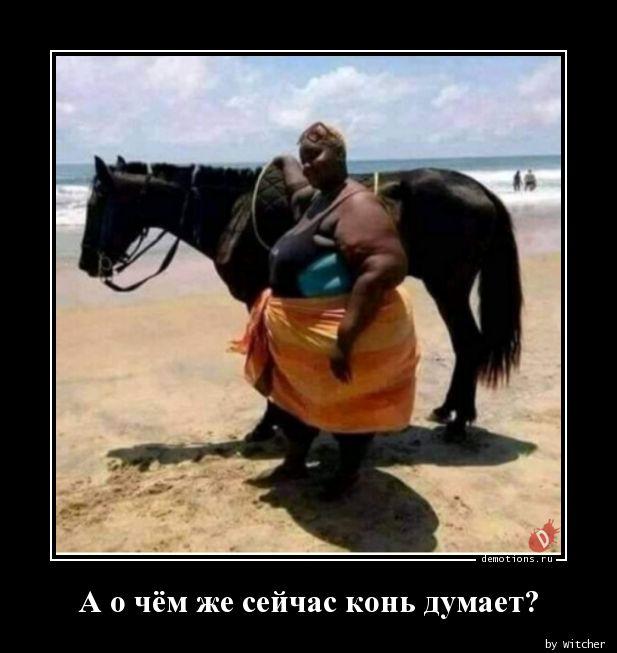 А о чём же сейчас конь думает?