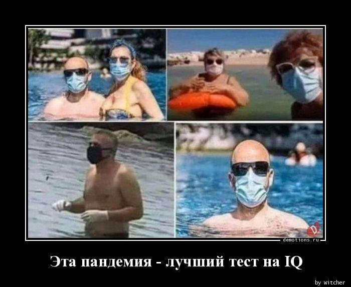 Эта пандемия - лучший тест на IQ