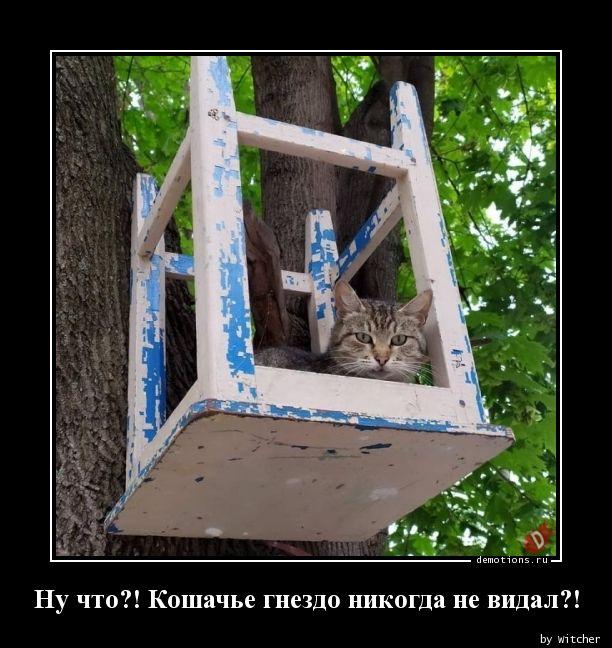 Ну что?! Кошачье гнездо никогда не видал?!
