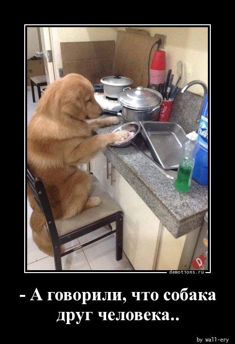 - А говорили, что собака друг человека..
