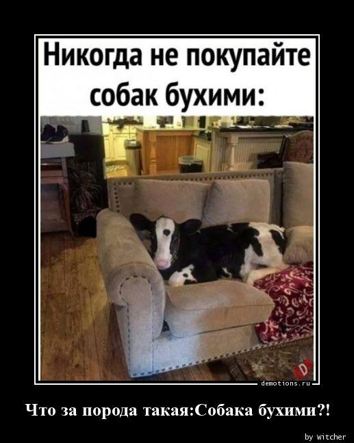 Что за порода такая:Собака бухими?!