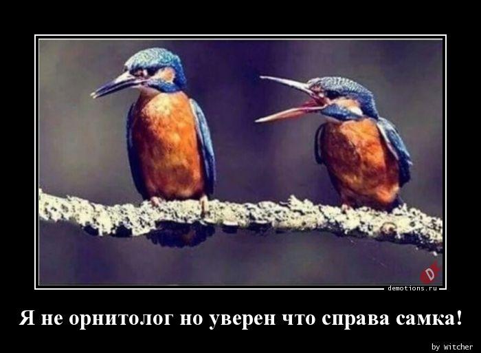 Я не орнитолог но уверен что справа самка!