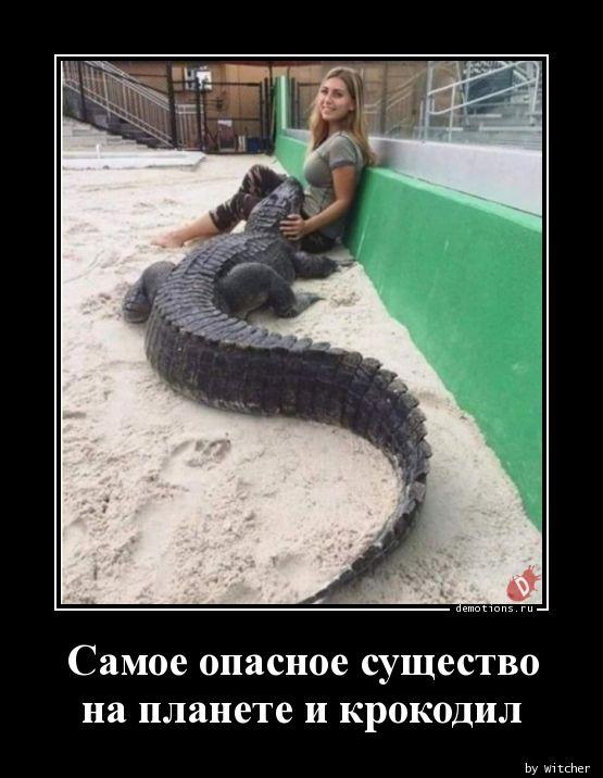 Самое опасное существо на планете и крокодил