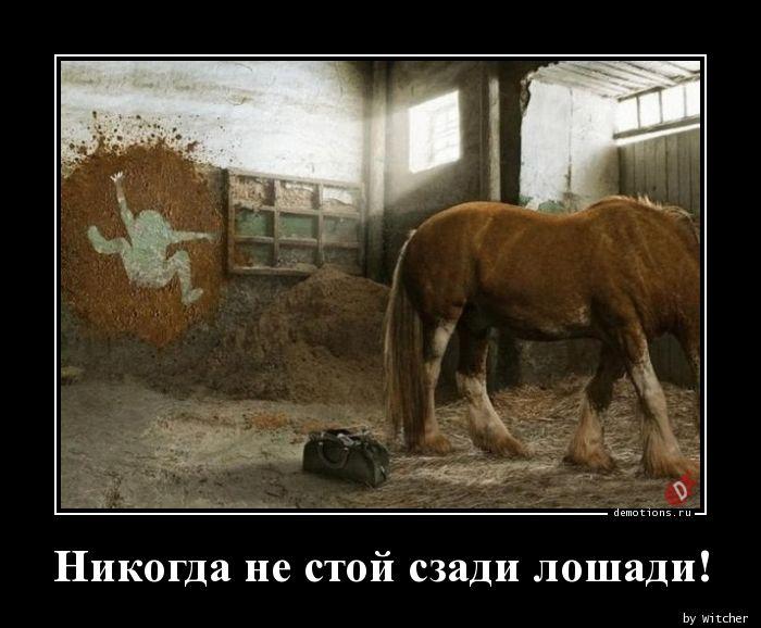 Никогда не стой сзади лошади!