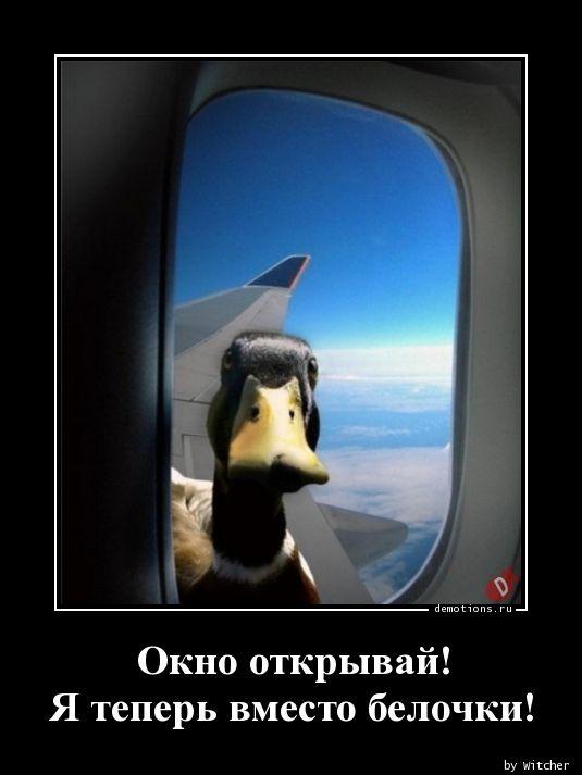 Окно открывай!  Я теперь вместо белочки!