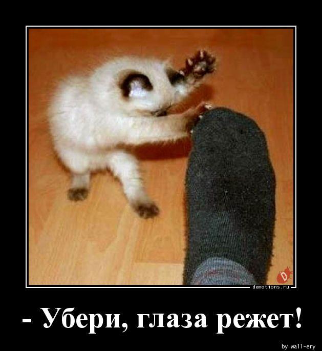 - Убери, глаза режет!