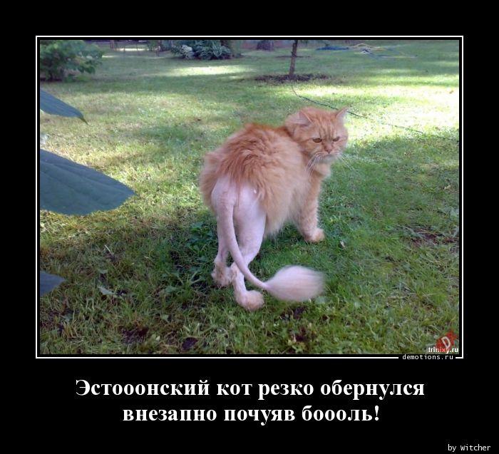 Эстооонский кот резко обернулся внезапно почуяв боооль!