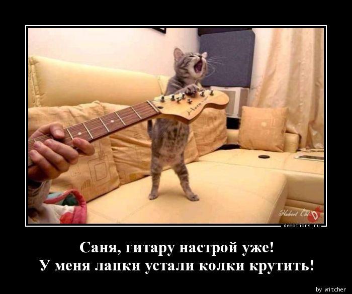 Саня, гитару настрой уже!  У меня лапки устали колки крутить!