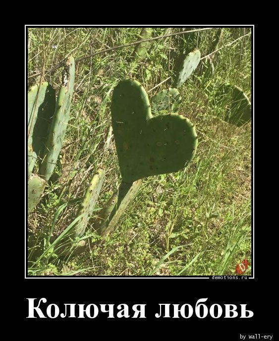 Колючая любовь