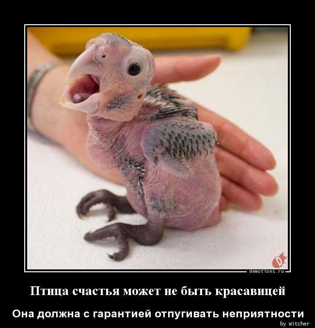 Птица счастья может не быть красавицей