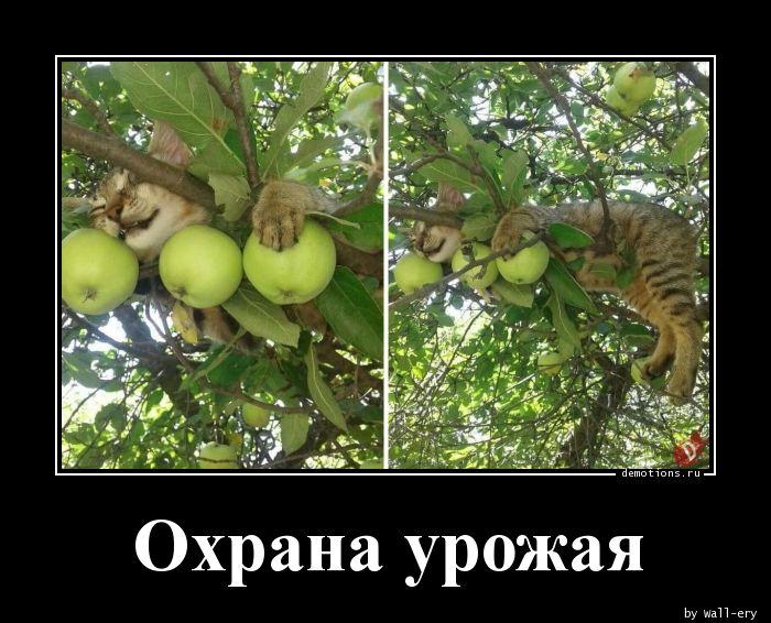 Охрана урожая