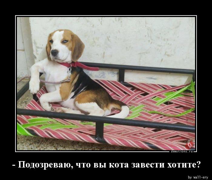 - Подозреваю, что вы кота завести хотите?