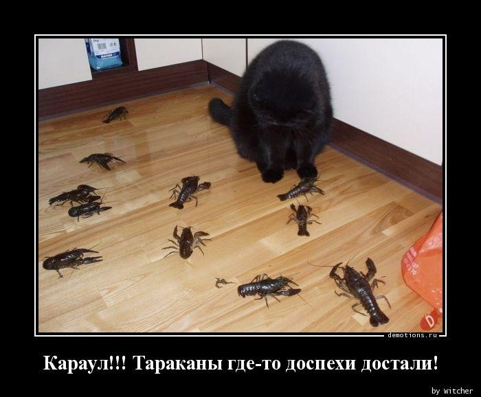 Караул!!! Тараканы где-то доспехи достали!
