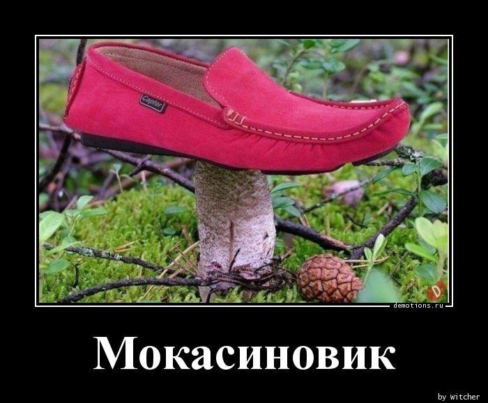 Мокасиновик