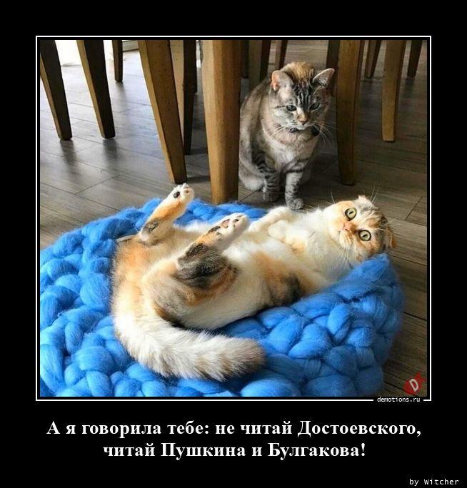 А я говорила тебе: не читай Достоевского, читай Пушкина и Булгакова!
