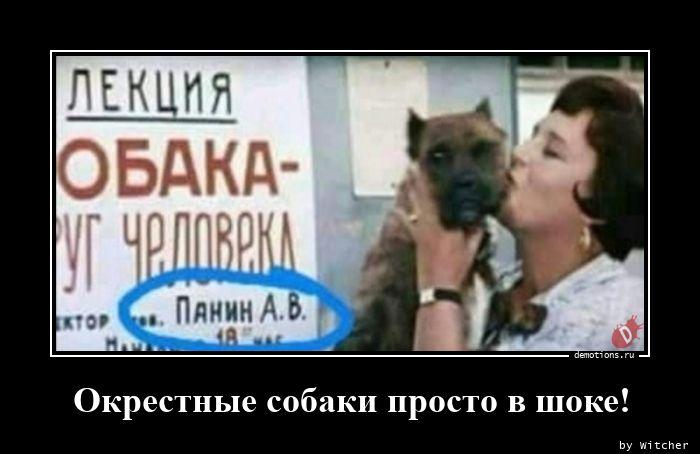 Окрестные собаки просто в шоке!