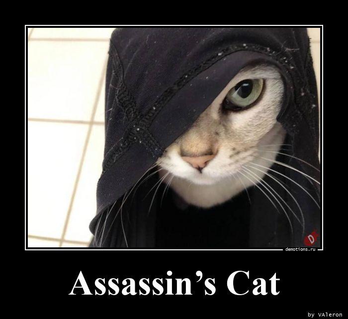 Assassin's Cat