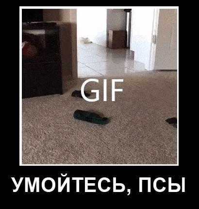 УМОЙТЕСЬ, ПСЫ