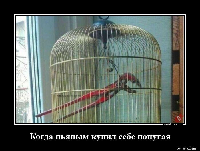 1598077368_Kogda-pyanym-kupil-s_demotion