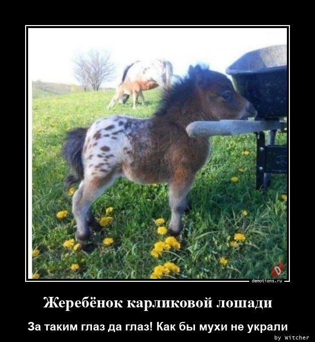 Жеребёнок карликовой лошади