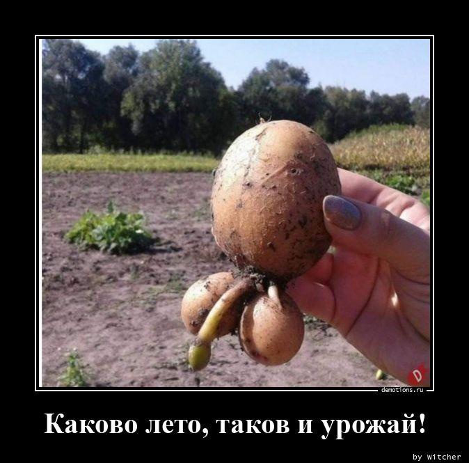 Каково лето, таков и урожай!